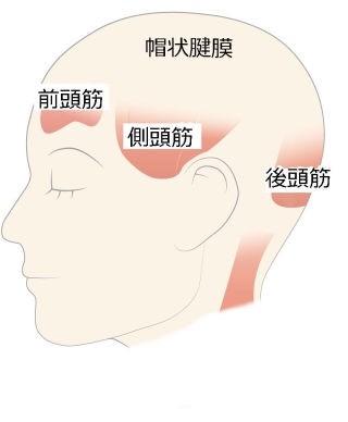 頭には全身に伝わるツボと、筋肉が存在しております。